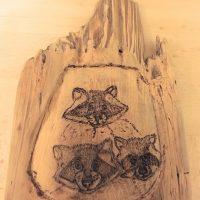 raccoons in tree
